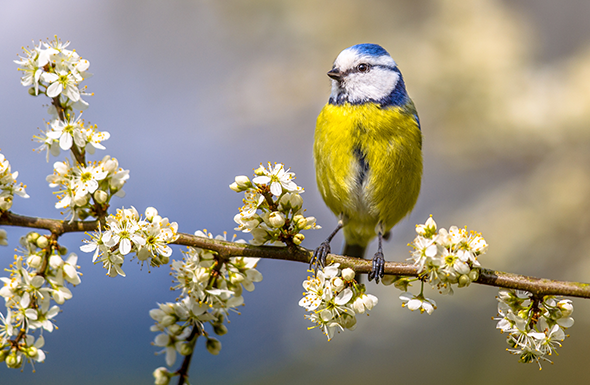 Spring into action to help wildlife